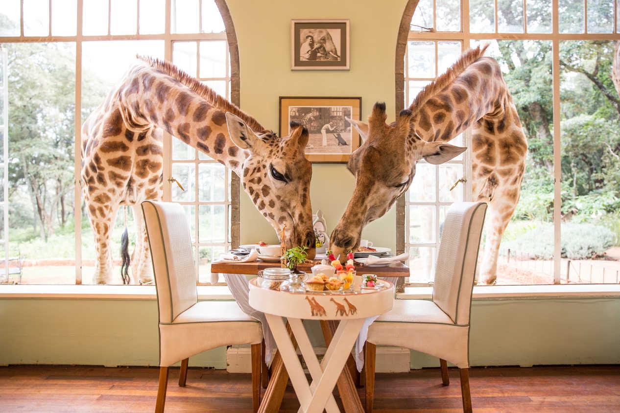 Realmomster Design Peeks Giraffe Manor Kenya